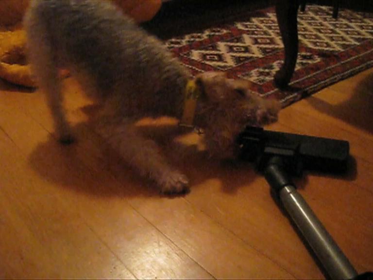 chien et aspirateur oct08