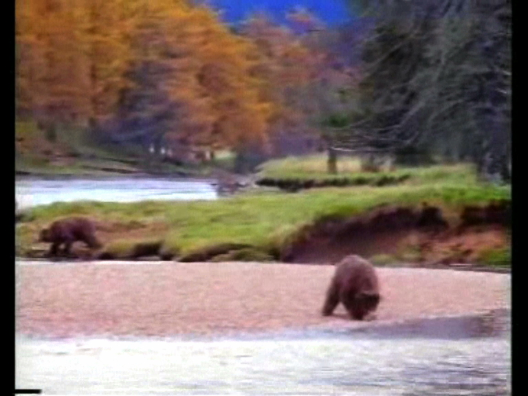l'ours mars03