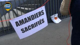 Cest-gagnu00e9-Amandiers-416